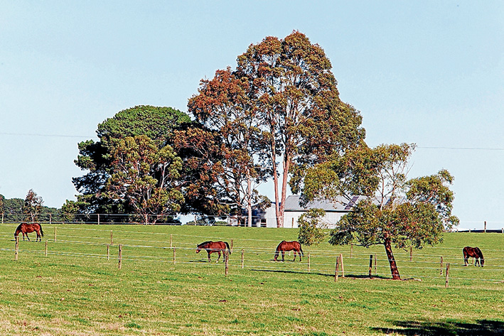 Horses are being kept out of harm's way at the Balnarring stud where a valued brood mare was callously shot early Saturday. Picture: Gary Sissons
