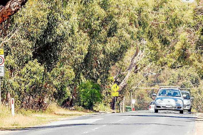 Sylvan scene: Widening Mt Eliza Way could cost many trees and shrubs, forever changing the appearance of the town's southern entry. Picture: Yanni