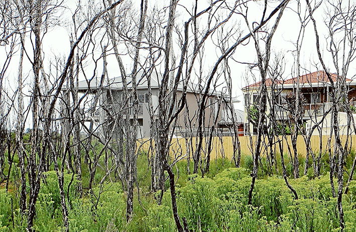 Close call: Burnt trees in Warringine Reserve, Hastings, remain as a stark reminder of how close a fire came to houses in January 2014. Picture: Keith Platt