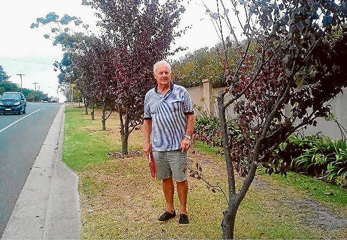 "Unkind cuts: Rob Debernardi beside his ""trimmed"" roadside trees. ""It's more like tree vandalism,"" he said."