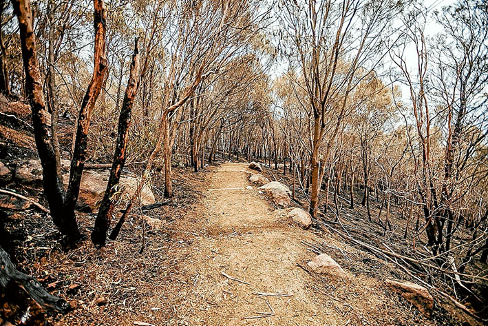 On track: A planned burn along the Bunurong Track was aimed at giving Arthurs Seat protection from bushfires. Pictures: Yanni