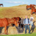 Ms Crosbie, left, and Ace-Hi owners Tony Marks, centre, and Ron Neary were happy to be photographed during the regular feeding time of  their herd. Picture: Yanni