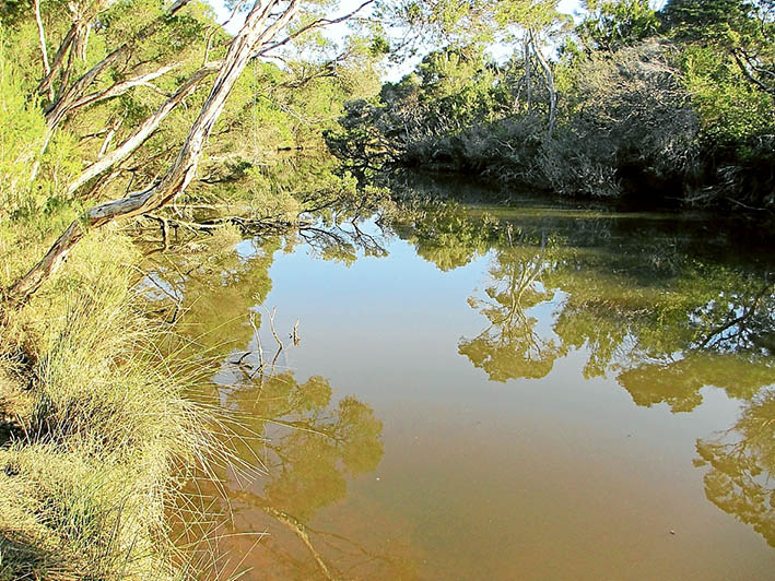 Still waters: Members of BERG Mt Martha are monitoring the health of Balcombe Creek. Picture: Keith Platt