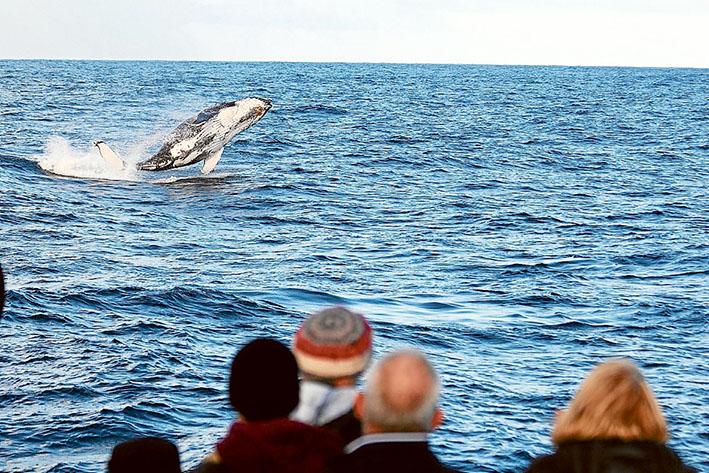 Picture: Makala Peter, Wildlife Cruises