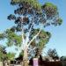 hastings tree