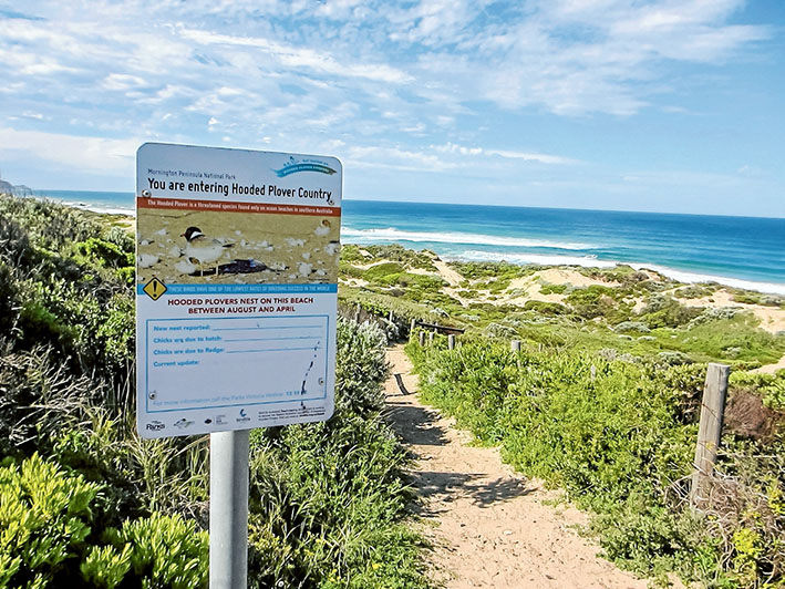 Lethal area: Parks Victoria is about to start a poisoning campaign to rid Mornington Peninsula National Park of foxes and feral cats. Picture: Keith Platt